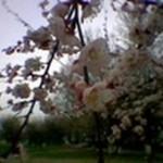 tashkent-vesna2