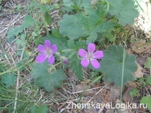 cveti v lesu2