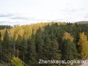osenniy les