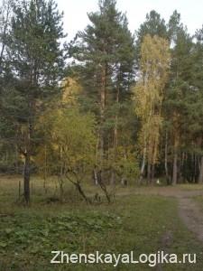 osenniy les2
