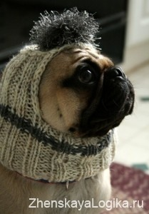 dogs clothes10