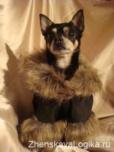 dogs clothes12