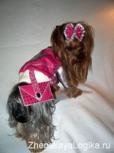 dogs clothes3