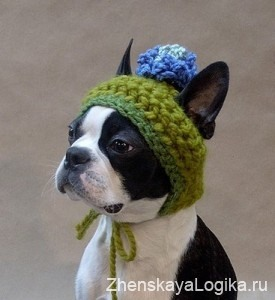 dogs clothes5