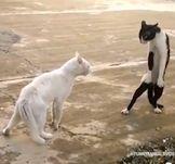И снова злые кошки