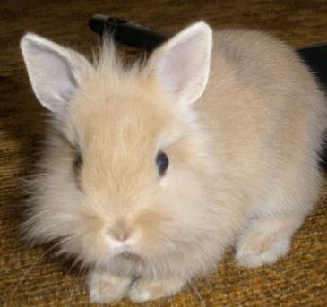 Забавная логика кролика