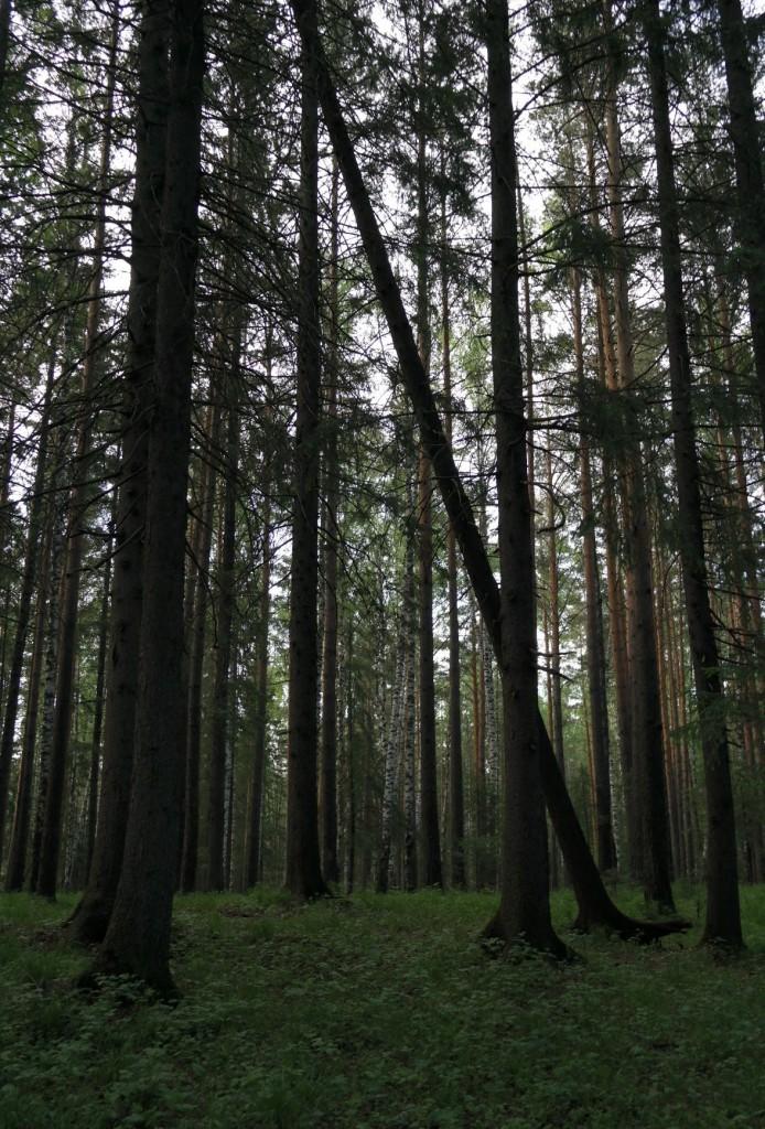 Наш лес и странные деревья