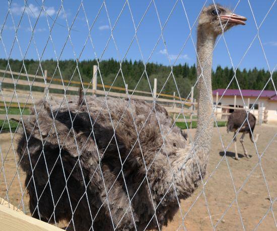Парк птиц в Златоусте