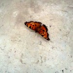 И о бабочках...