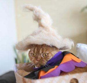 Шапочки для кошек из кошачьей шерсти
