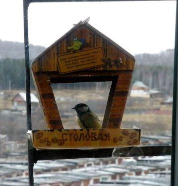 Почему нельзя кормить птичек на балконе
