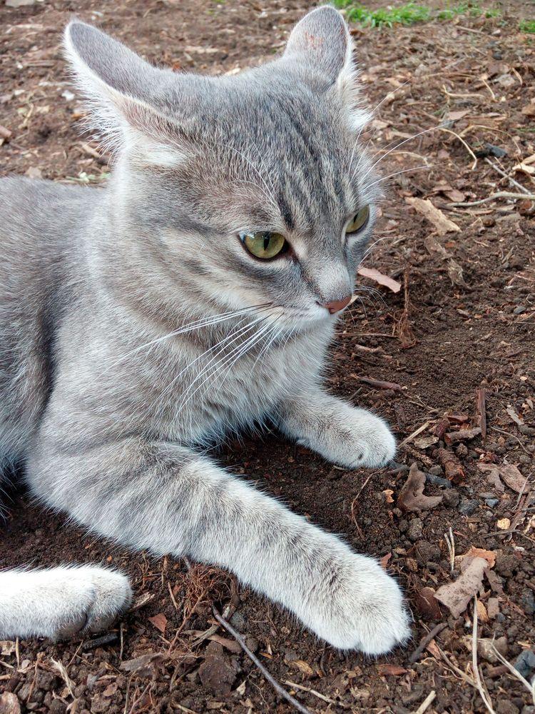 Сосед-кот VS сосед-человек