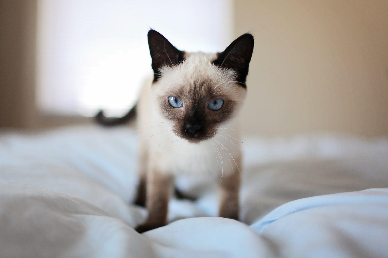 Как узнать настоящий возраст кошек и собак?
