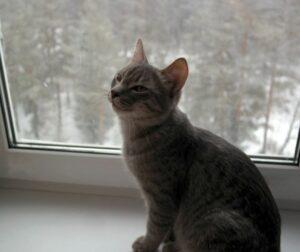 Если в дом забежал кот