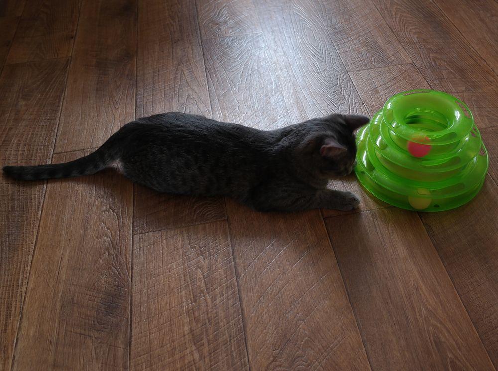 Игрушка для кота с АлиЭкспресс - отзыв