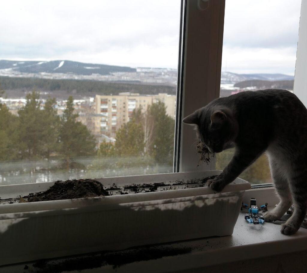 Огород на балконе и кот