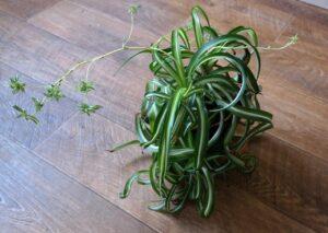 3 полезных и неприхотливых комнатных растения