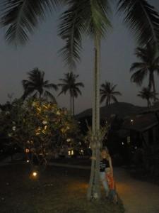 и пальма в подарок!