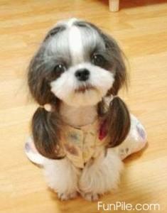 причёска для собак