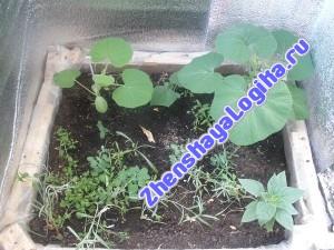 Огород на балконе - 3