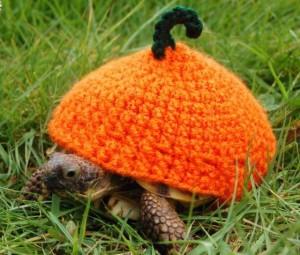 Черепахи в вязанных шапочках