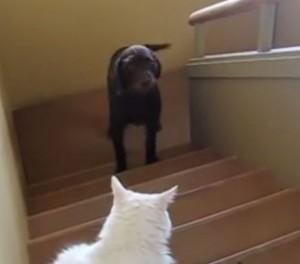 Собаки, которые боятся кошек