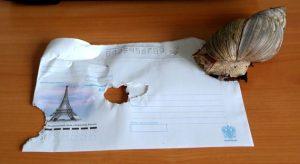Что такое Snail mail в действии